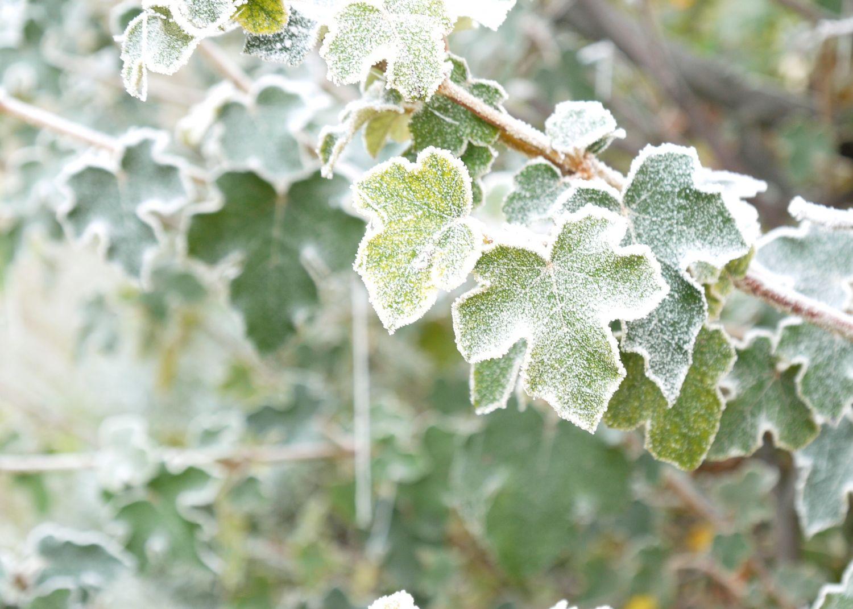 Eine wuchernde Pflanze als Metapher für den GIST-Krebs.