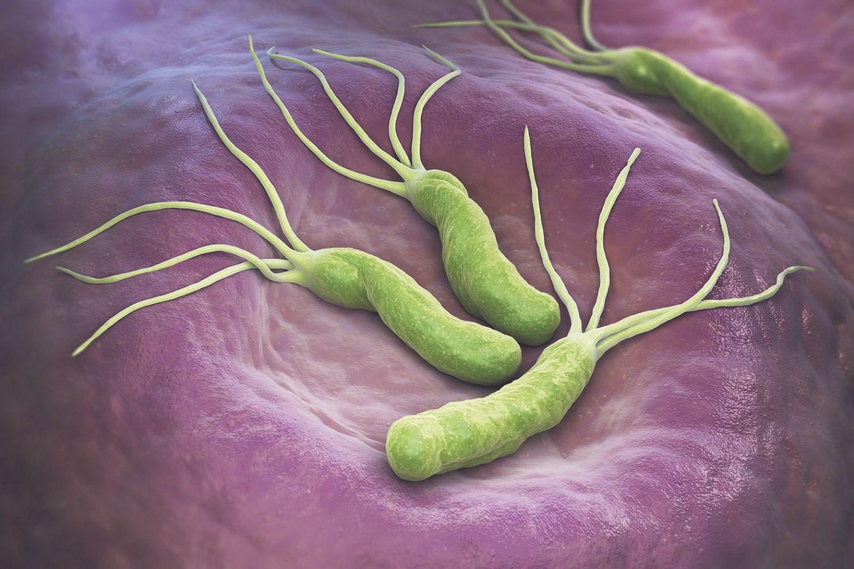 Grafische Darstellung des Magenbakteriums Helicobacter pylori
